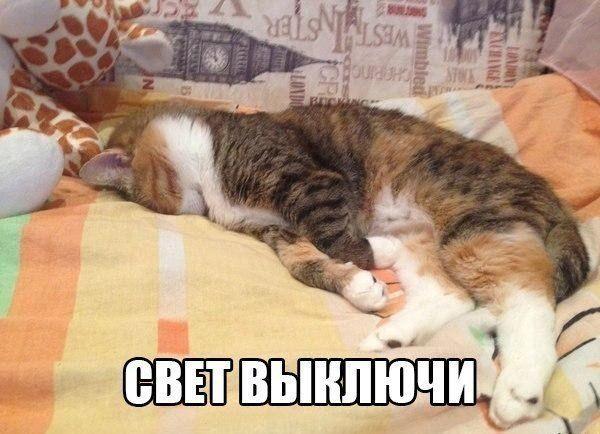 Пин от пользователя Интернет - зоомагазин ZooMisto с ...