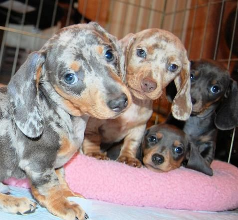 Four little weiners........Awww!!! (With images