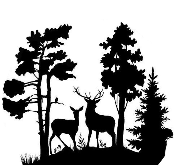 разных женщин картинка лес вырезать путевки сайте