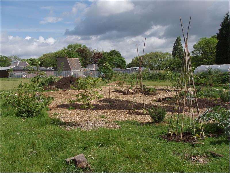 Hackney community tree nursery and edible forest garden