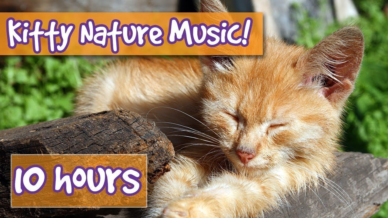 Relaxing Cat And Kitten Music With Nature Sounds Music To Calm Cats Wit Calming Cat Animal Sounds Cats And Kittens