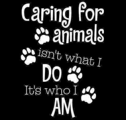 Pin By Jan Craig On Who I Am Pinterest Dogs Pets And Animals