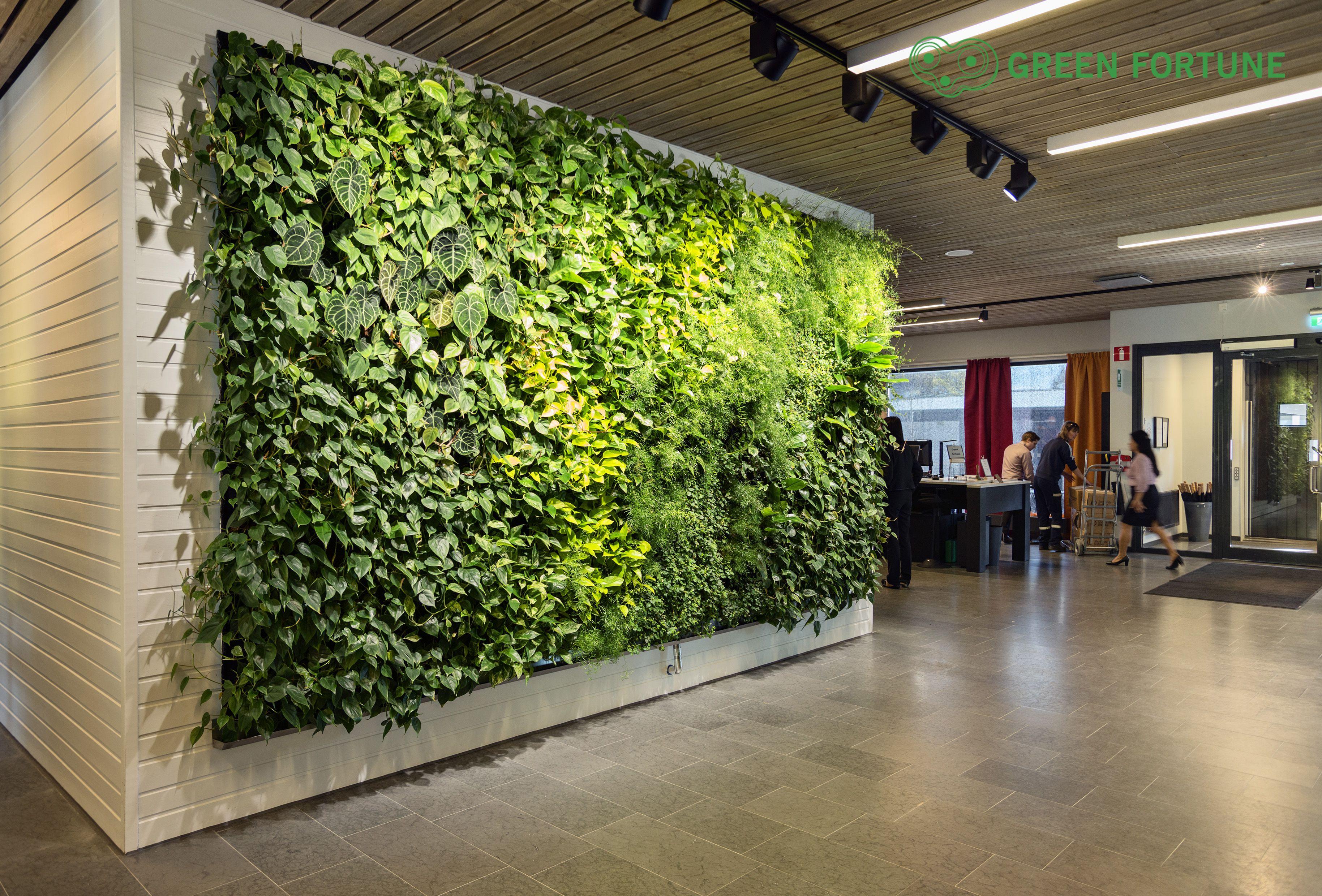 green fortune plantwall vertical garden office entrance. Black Bedroom Furniture Sets. Home Design Ideas