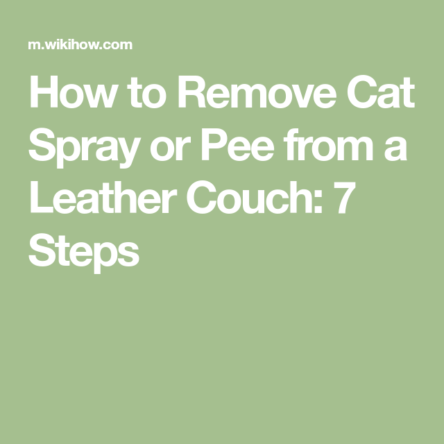 Fine Remove Cat Spray Or Pee From A Leather Couch For The Home Creativecarmelina Interior Chair Design Creativecarmelinacom