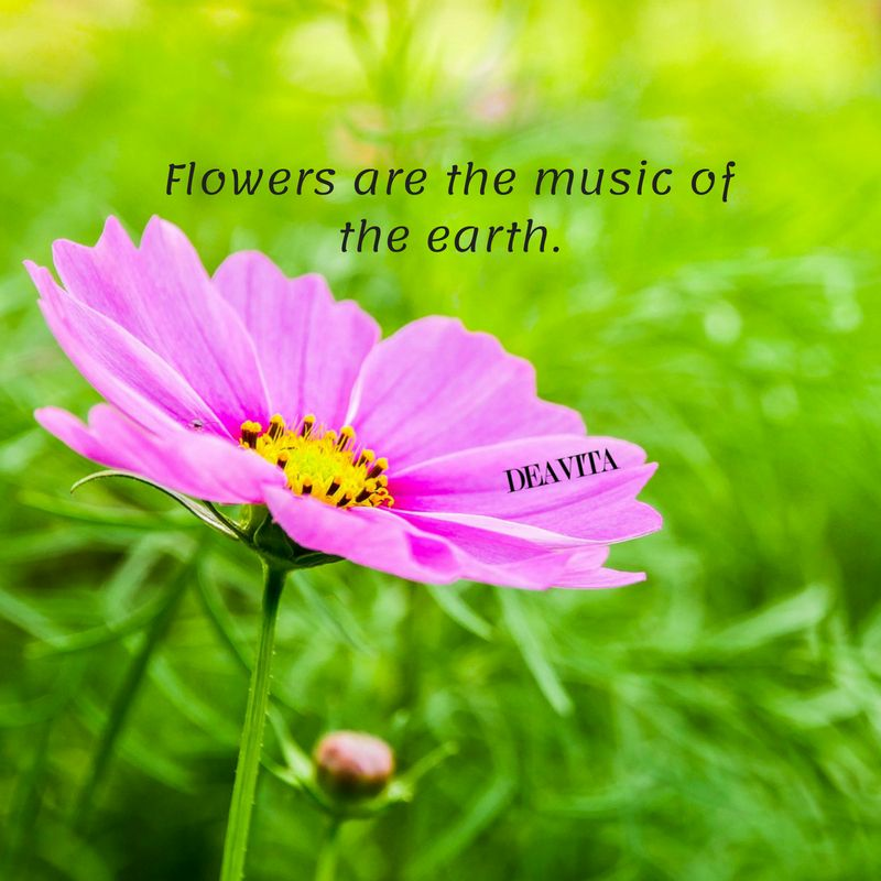 Beautiful Cards With Flowers And Short Quotes Cards Flower Quotes Flower Quotes Inspirational Flower Quotes Beautiful Flower Quotes