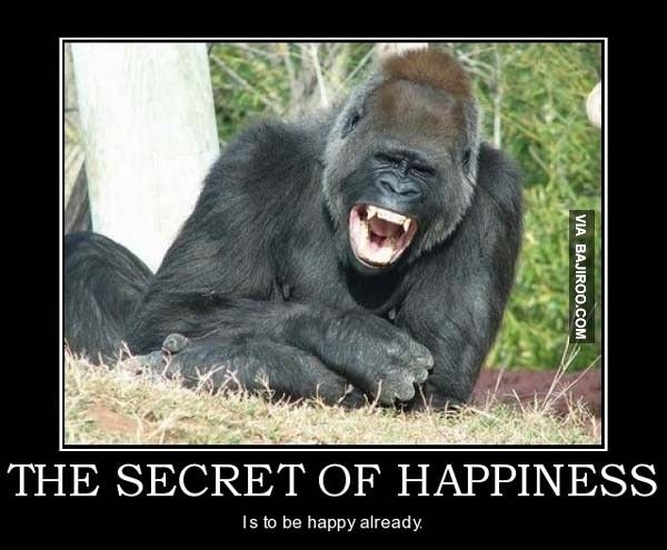 the secret happiness laughing gorilla happiness ...