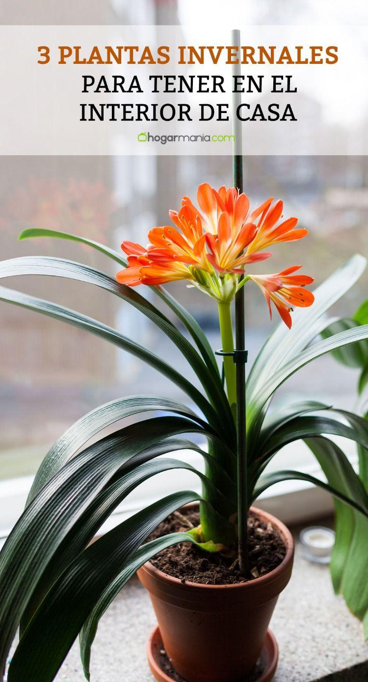 3 plantas invernales para tener en el interior de casa for Planta perenne en maceta de invierno