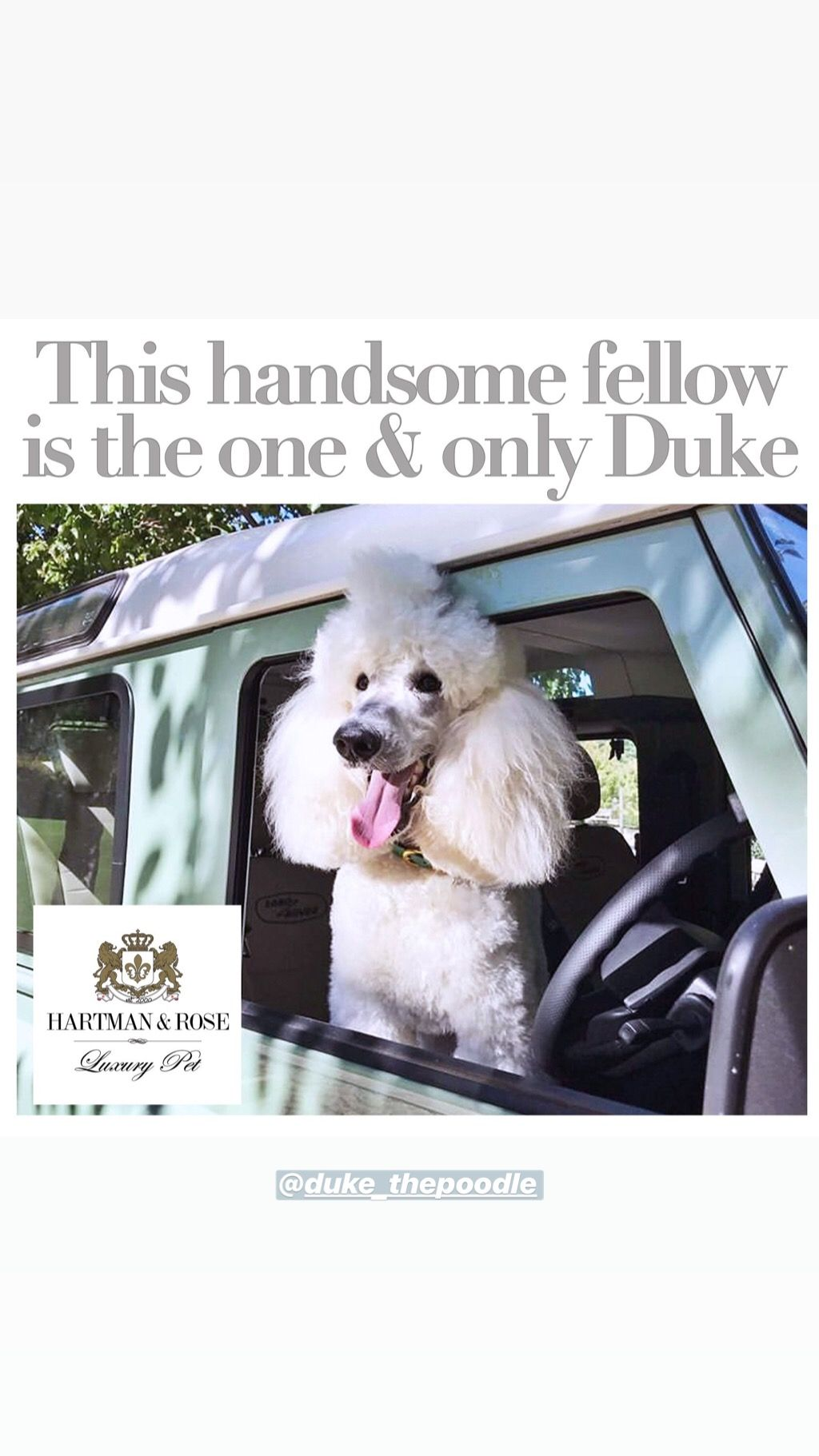 Save 40% use code: Parkavenue Hartman & Rose Luxury Pet Products www.hartmanandrose.com @hartmanandrose #hartmanandrose  This is Duke the majestic Standard Poodle looking super cool in this vintage Land Rover Defender. Wearing his H&R collar in kelly green ready for a big adventure. @duke_thepoodle Take the Lead & Walk in Style ❤️
