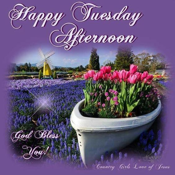 Happy Tuesday Afternoon