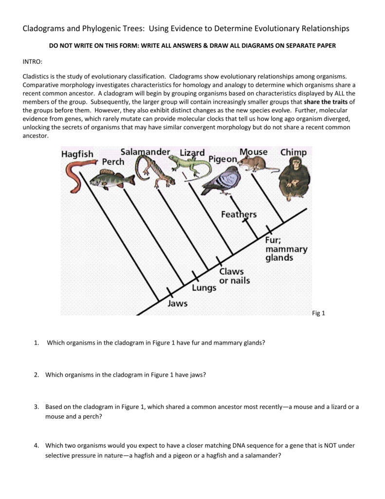 worksheet. Cladogram Worksheet Answers. Grass Fedjp