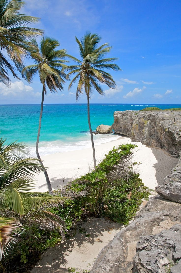 Barbados Turtle Beach So Want To Go Here With Will It Looks