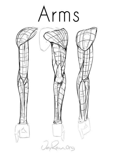 Arm Anatomy Workbook (PDF) — JeyRam Art in 2020 | Arm ...