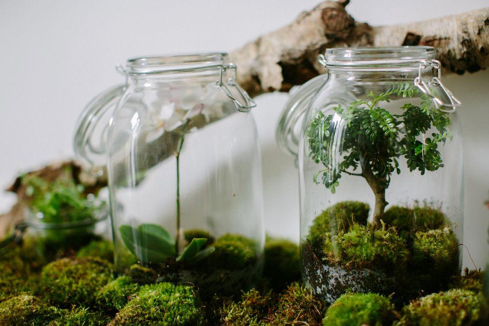 terrarium bocal les herbes hautes paris via nat et nature. Black Bedroom Furniture Sets. Home Design Ideas