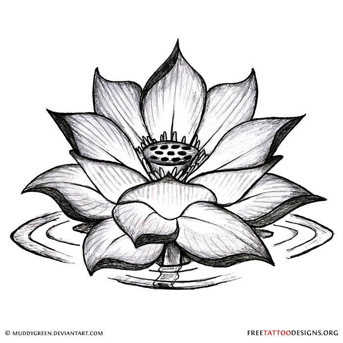 Lotus tattoo design tattoos pinterest lotus tattoo design meanings of lotus tattoos mightylinksfo