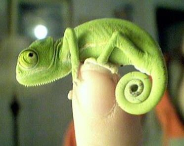 This Lizard Is Adorable I Love His Or Her Fashion Sense The