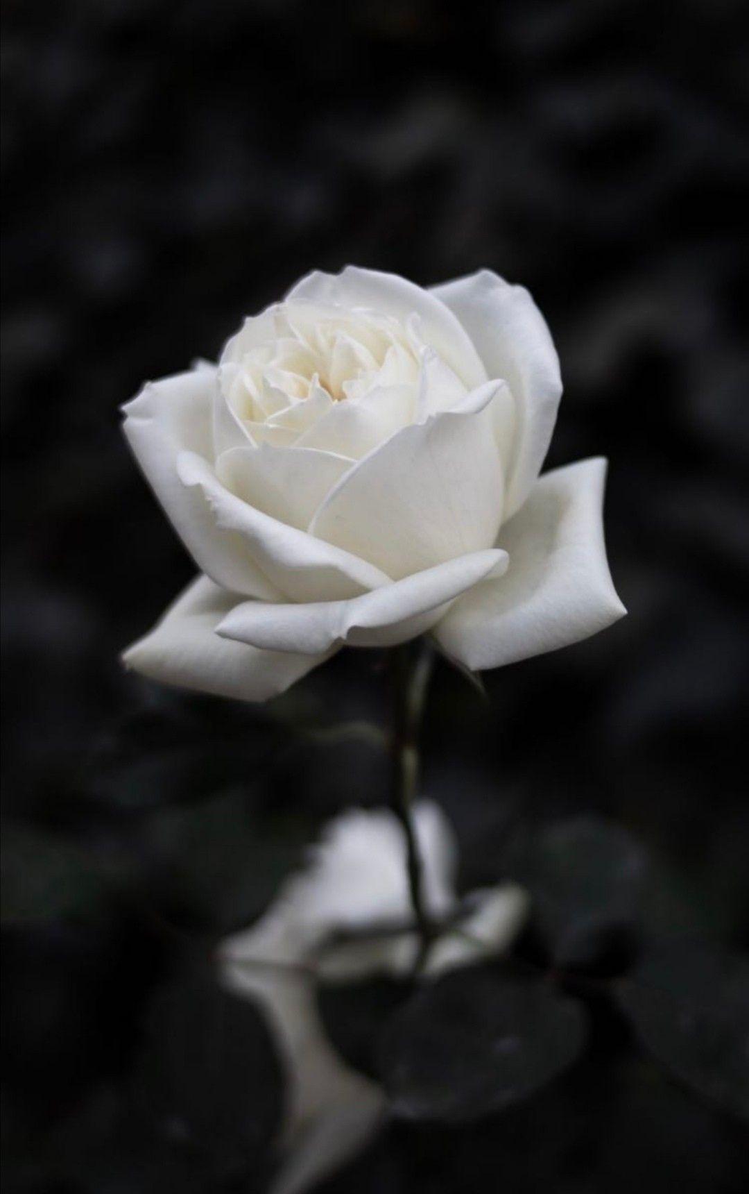Epingle Par Nadia Lopes Sur Aesthetique En 2020 Fond D Ecran Fleur Rose Fond D Ecran Telephone Fond D Ecran Telephone Fleurs