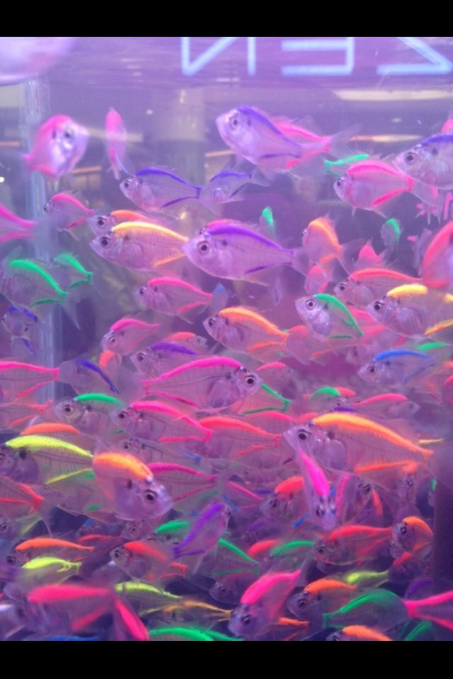 Neon Glowing Fishes Xv A Os Pinterest Neon Fish And