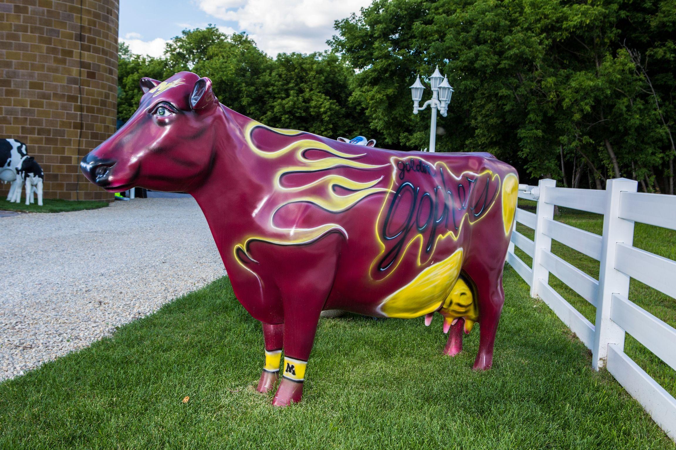 Minnesota Gophers Cow Cow, Minnesota gophers, Animals