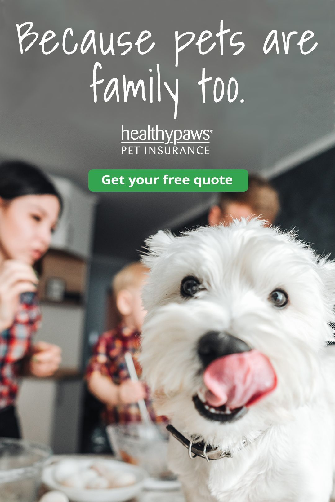 With Healthy Paws Pet Insurance & Foundation, you can give