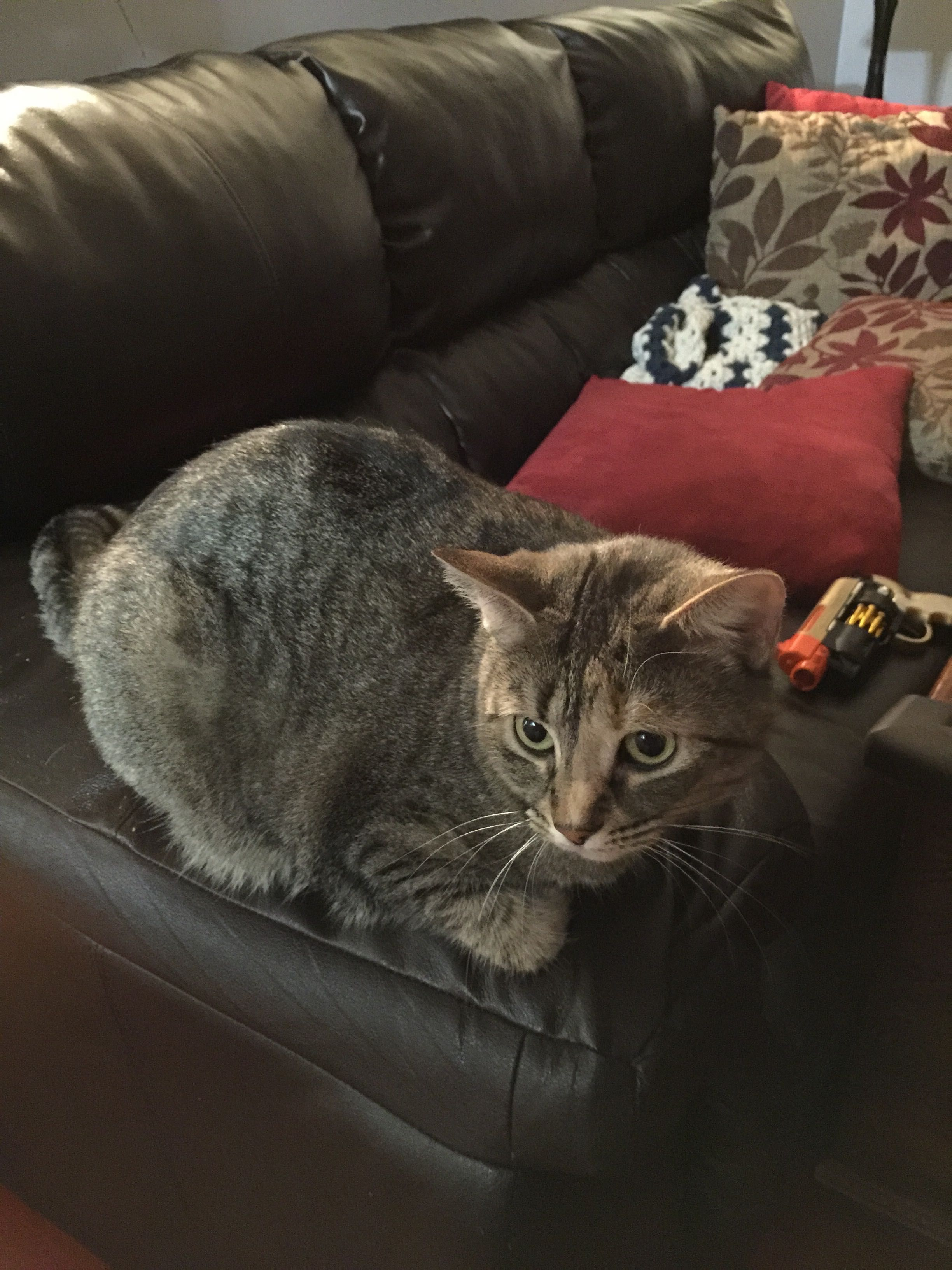 MISSING CAT from ROCKY HILL on 1/13/15 Gray and brown