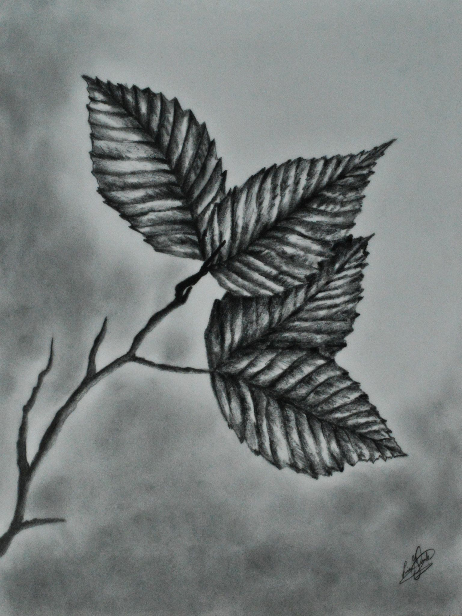 Pencil drawing realistic leaves
