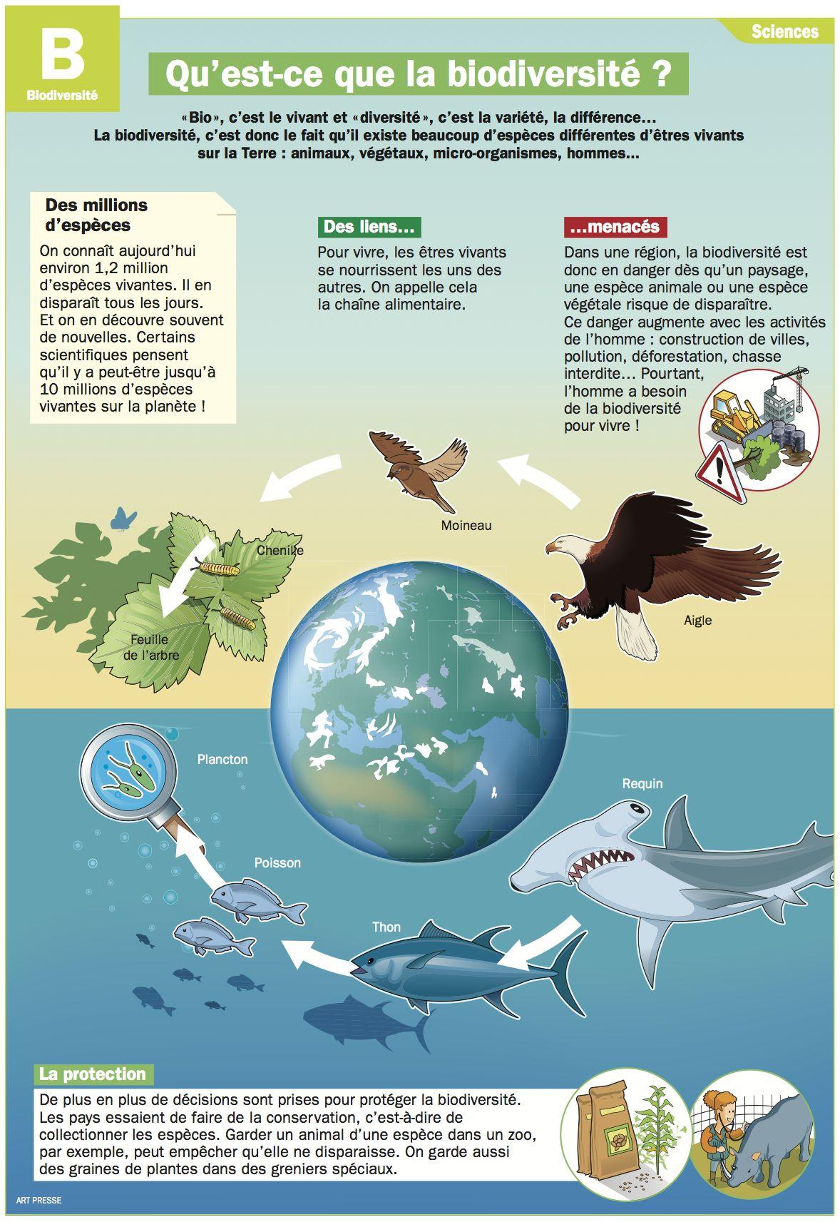 Quest Ce Que La Biodiversité Infographies Environnement
