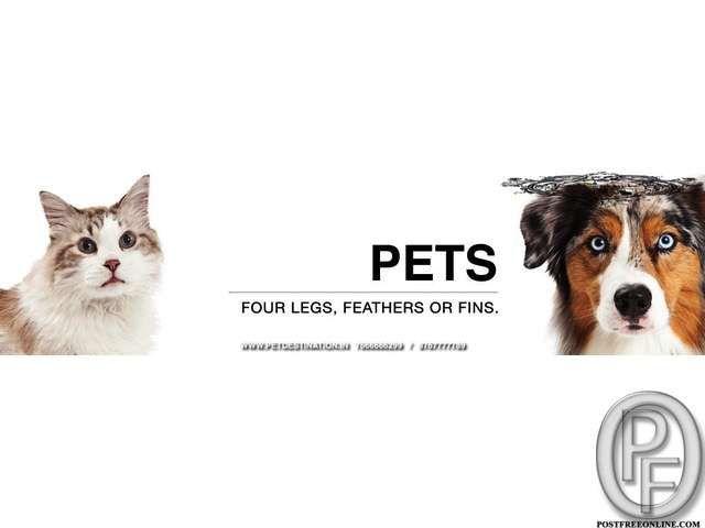 PREMIUM DOGS, CATS, BIRDS FOR SALE +917666666299 in Mumbai