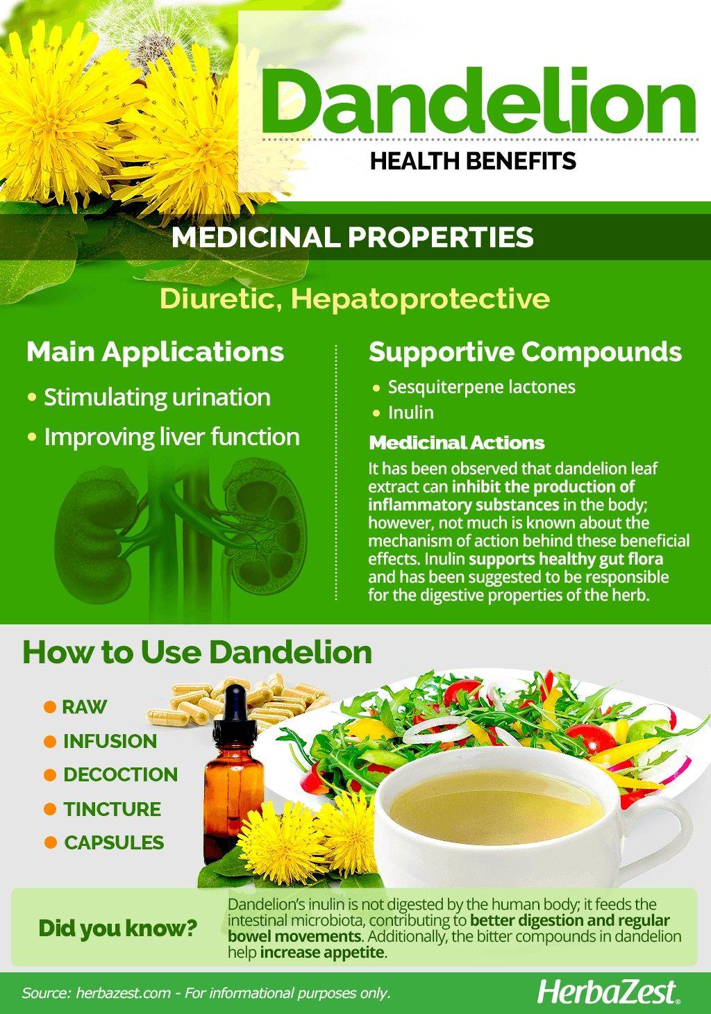 Dandelion Fruit Health Benefits Dandelion Health Benefits Coconut Health Benefits