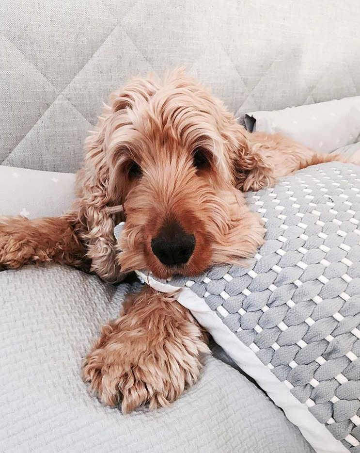 Saturday night in with our customised bedhead is looking