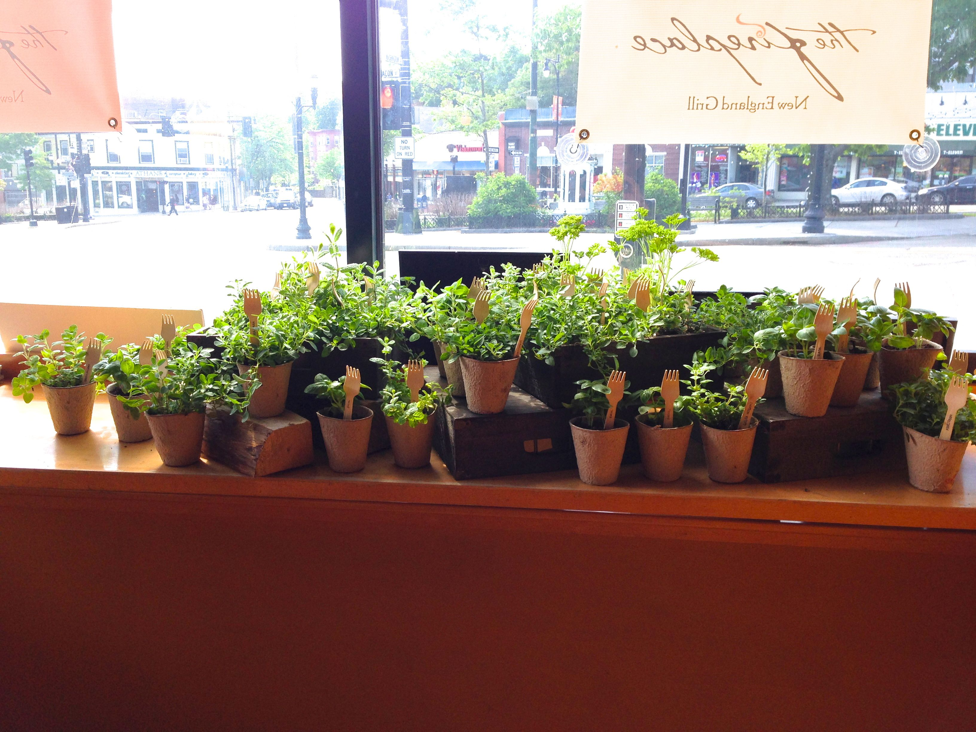 Herb display at The Fireplace in Brookline, MA. We love a ...