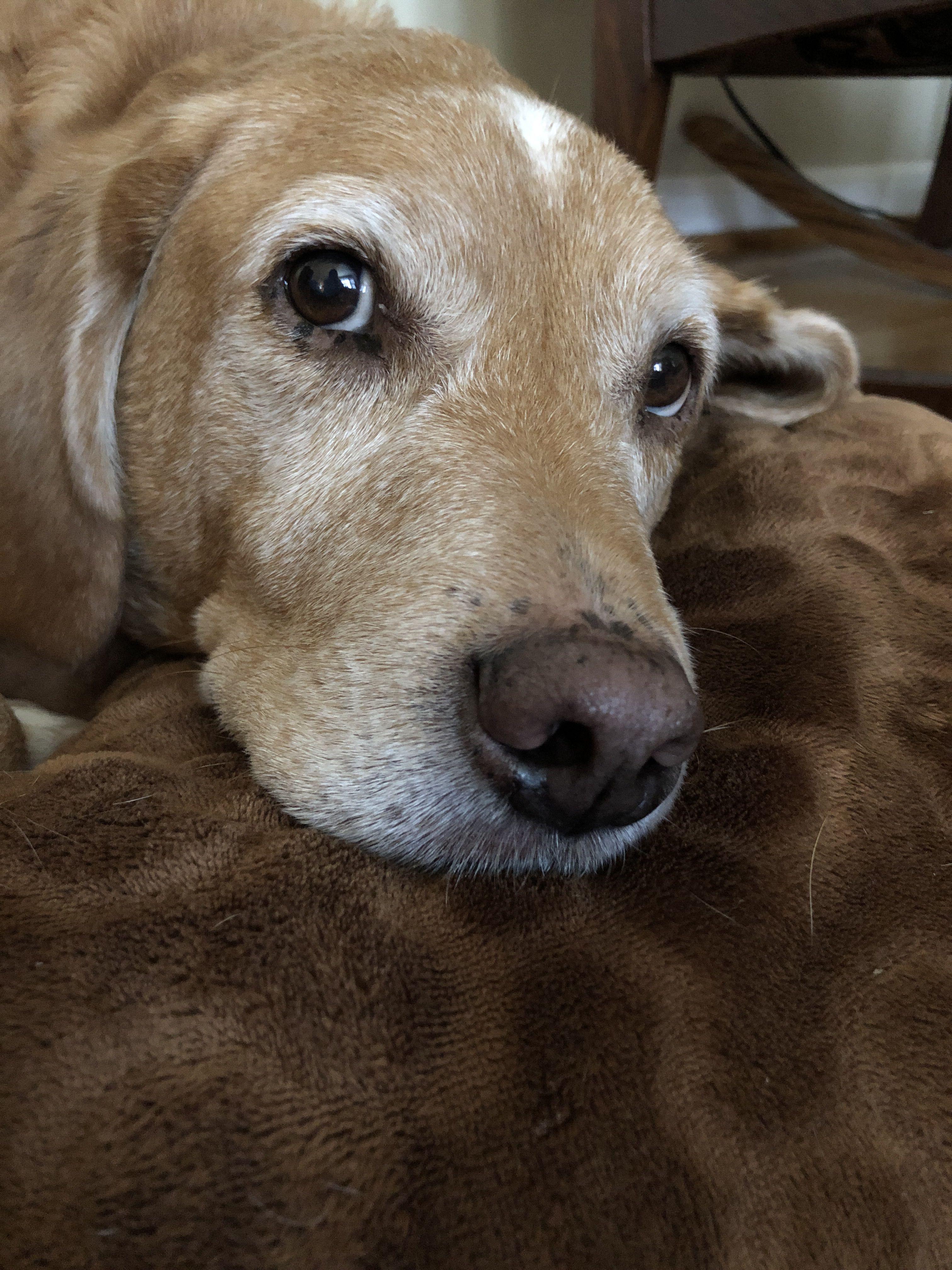 Codydog Puppys Dogs Puppies Animals