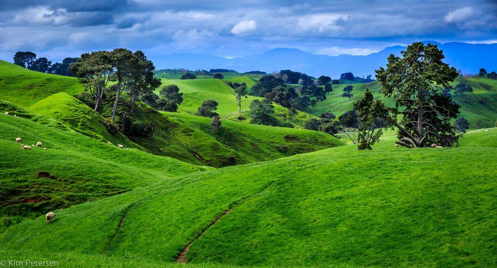 The Perfekt Landscape For A Hobbit New Zealand Landscape Photography Trees Landscape Photography Sunset Landscape Photography