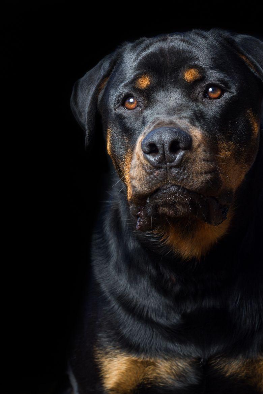 Luxuryandlife Luxury And Life Guard Dog Breeds Dog Breeds