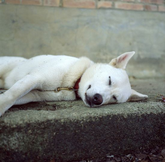 Cutest Examples of Snoozing Animals Photography