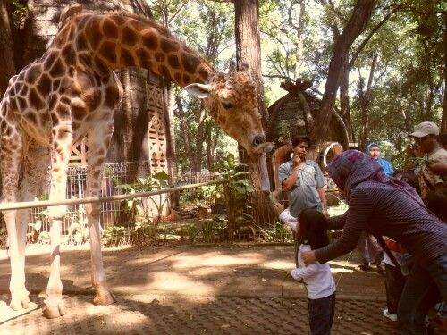 Kebun Binatang Se Indonesia