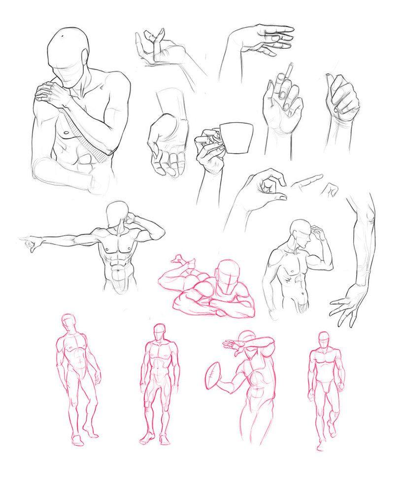 Anatomy Studies by Adreean | Sketches and Anatomy | Pinterest ...