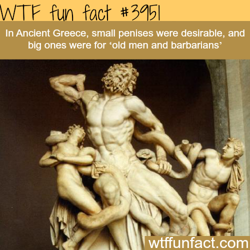 Fun Facts About Penis 81