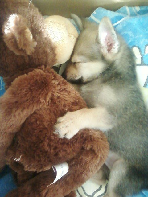 Pets And Their Stuffed Animals This Stuffed Monkey Seems To Take His Job As A Puppy Snuggler Very Seriously Sleeping Puppies Cute Animals Animals