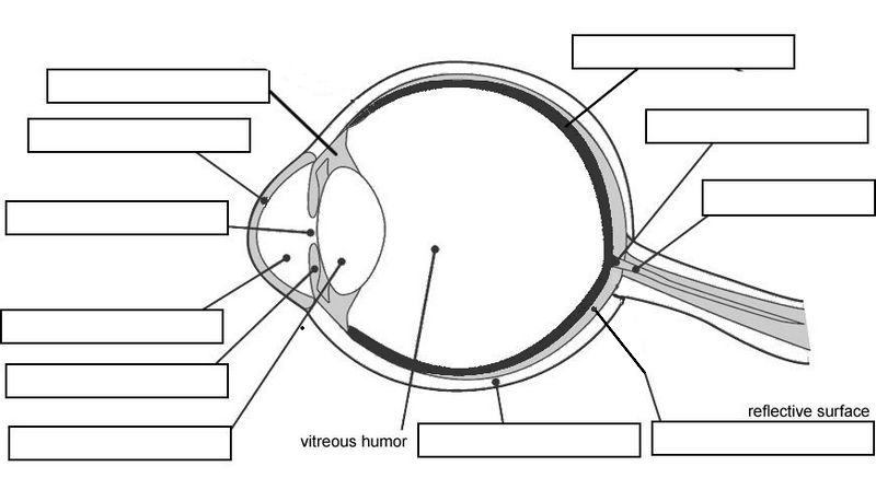 Collection Blank Diagram Of The Eye To Label Pictures - Diagrams