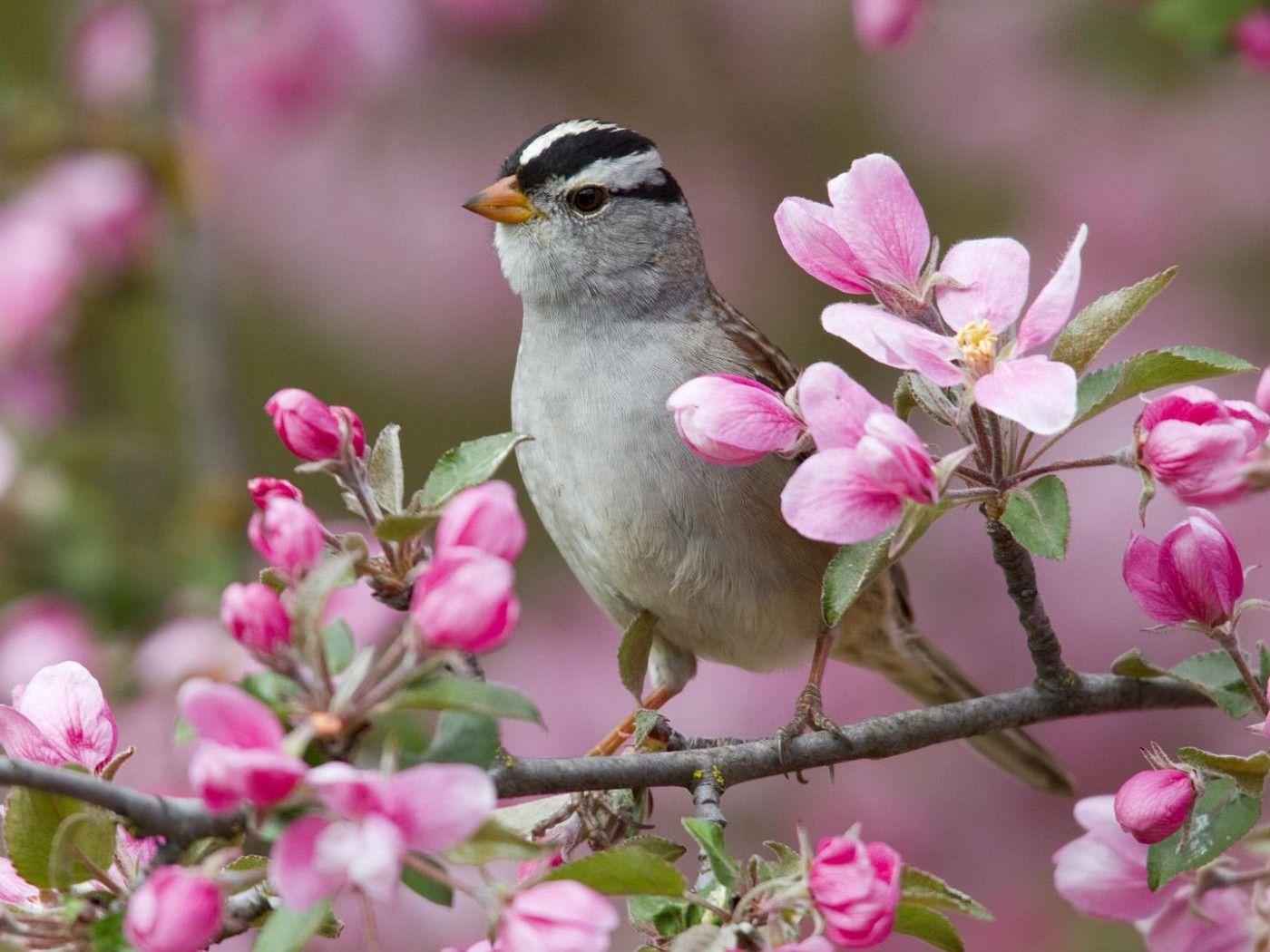 wallpaper little bird beautiful flower photography close up