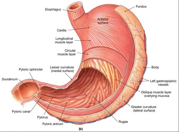 Nursing anatomy & Physiology Review of digestive system | Nursing ...