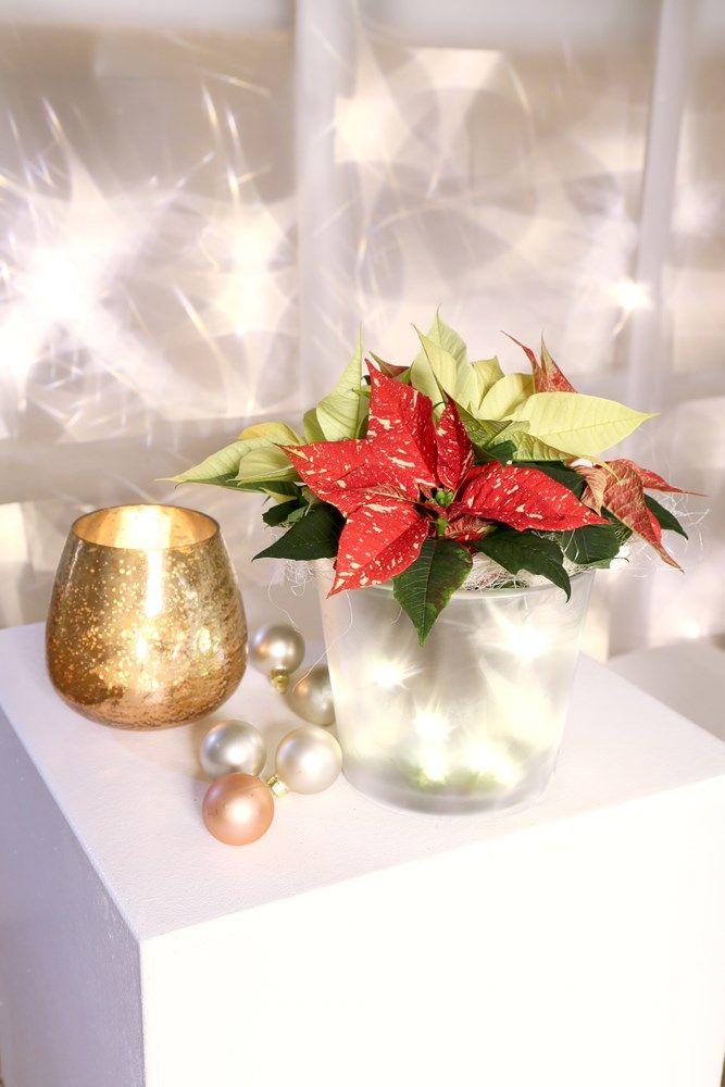Dekoracje Bożonarodzeniowe 2017 Ozdoby W Wazonach Z