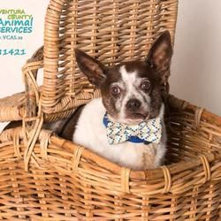 Ventura County Animal Services - Animal Shelters ... |Ventura County Animal Services
