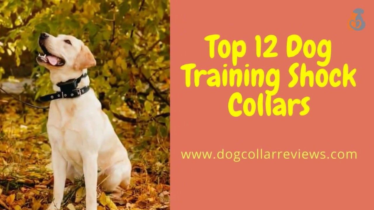 Best Dog Training Collar Reviews 2018 Must Watch And Visit It