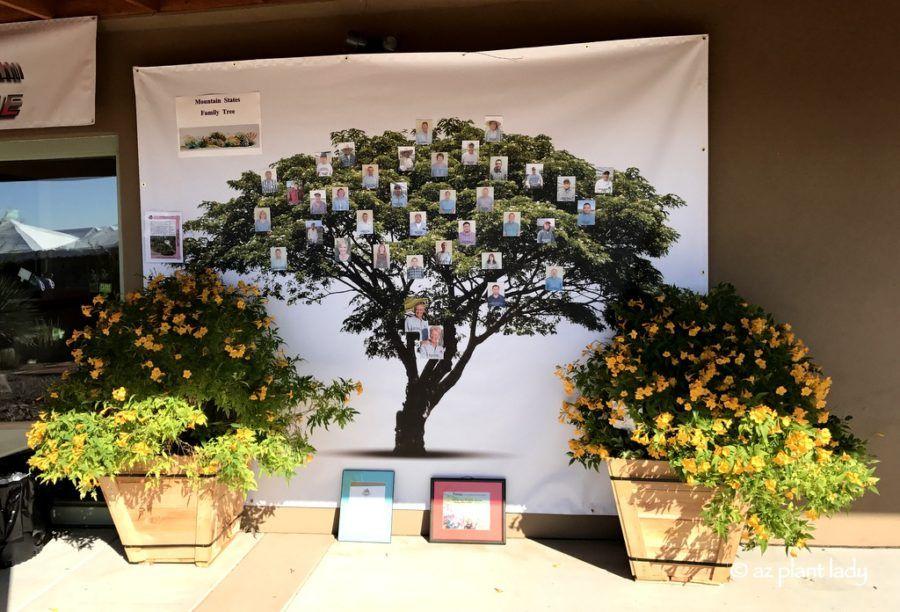 Sierra Apricot Esperanza At Mountain States Whole Nursery In Arizona