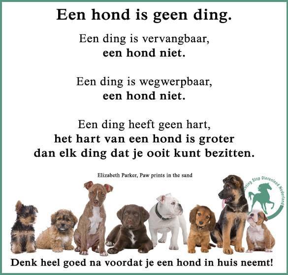 Citaten Over Honden : Stop dierenleed nederland deze spreuk gaat over honden