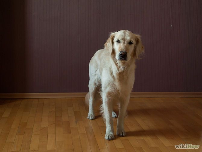 Teach Your Dog To Sit Dog Training Dogs Dog Hacks
