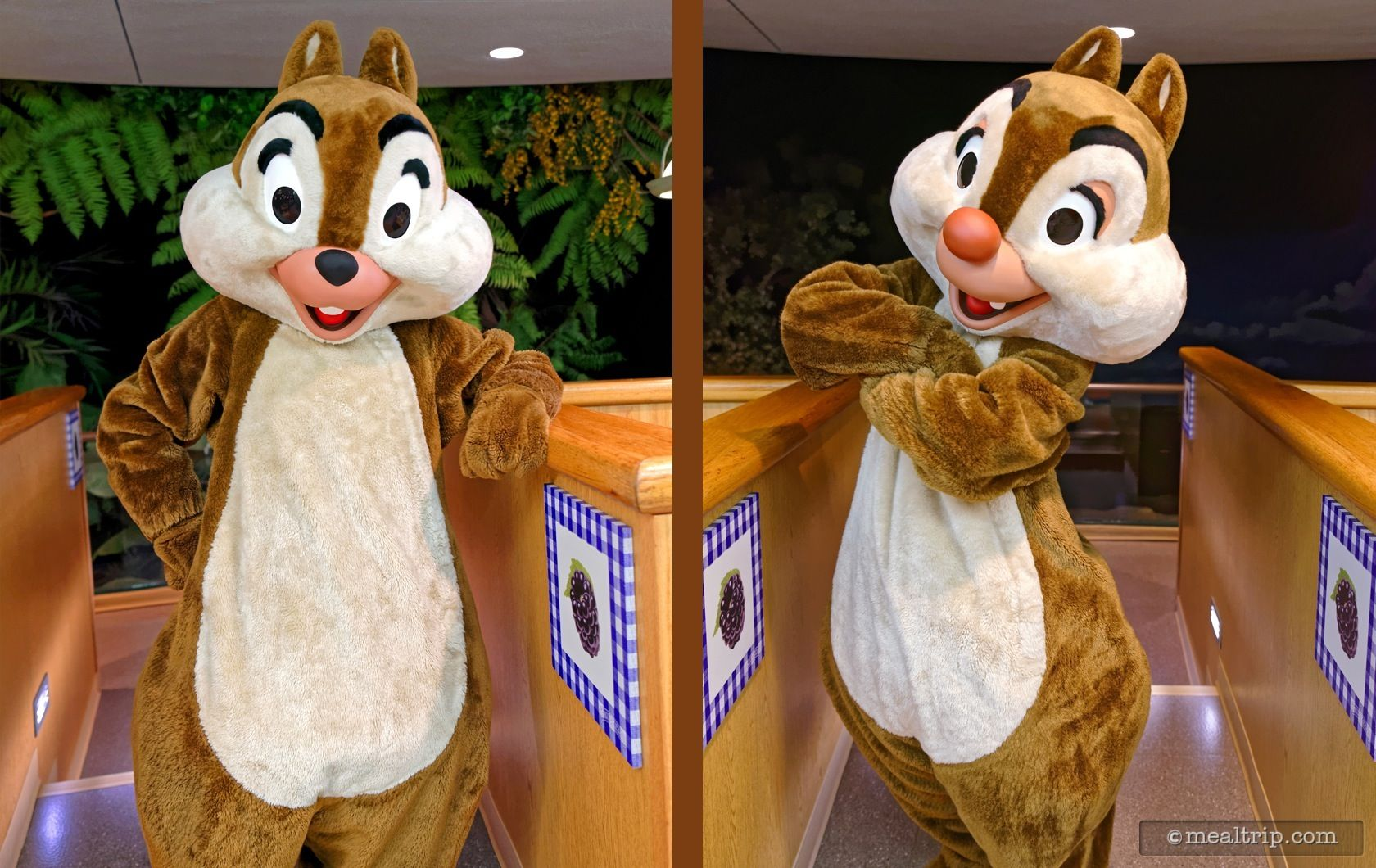 chip-and-dale-at-the-garden-grill-epcot-dinner.jpg 1,680×1,060 ...