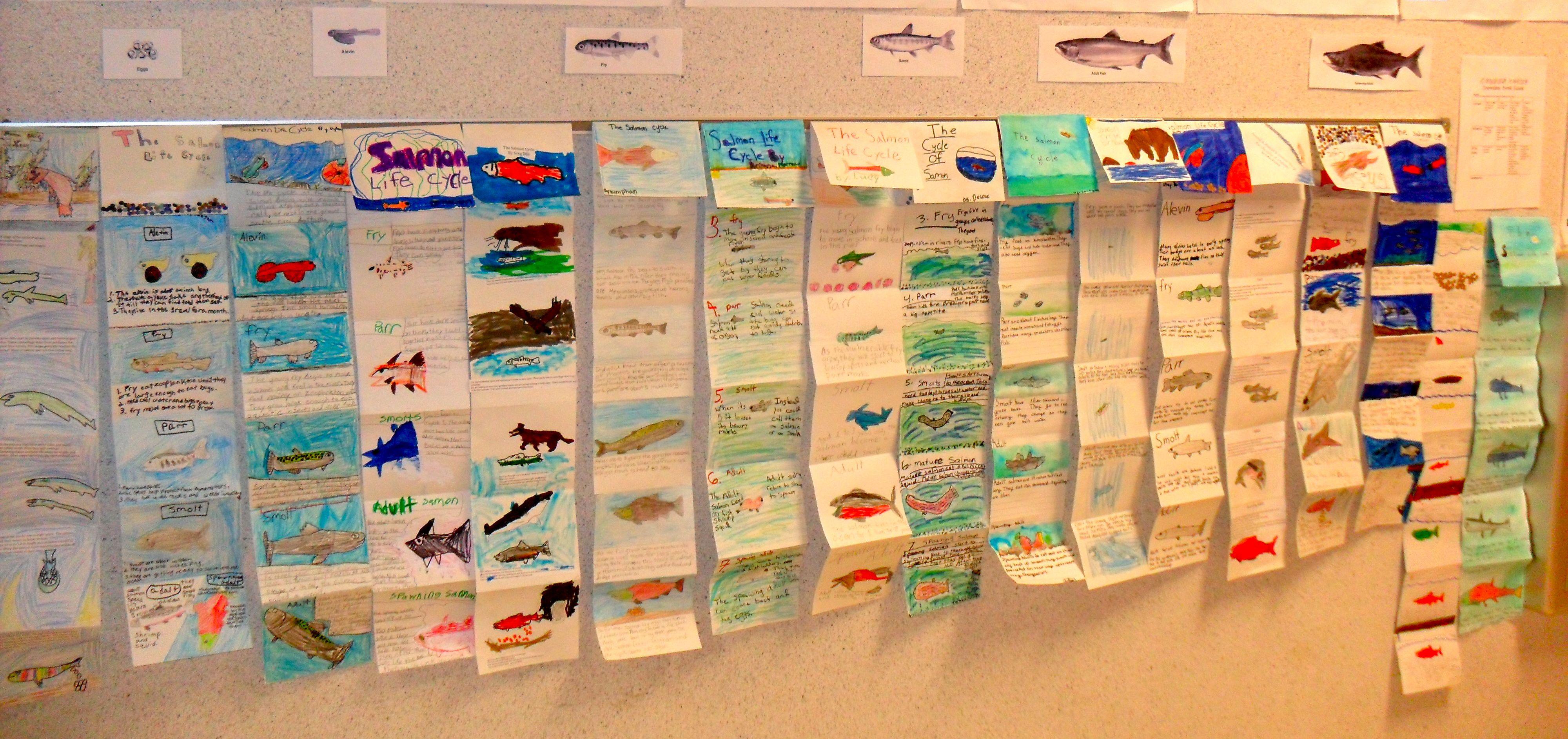 Salmon Life Cycle Accordion Books