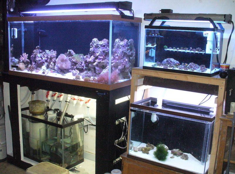 Diy sump plans google search aquarium pinterest for Pet supermarket fish tanks